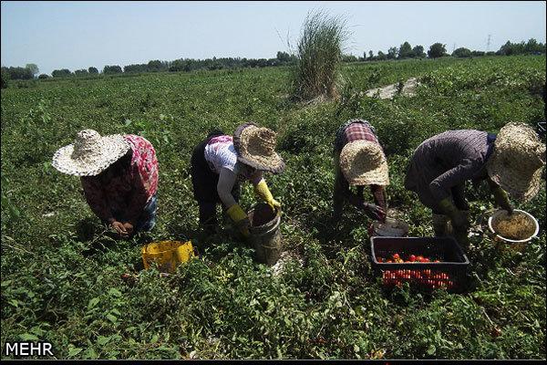افت مشاغل کشاورزی در ۱۴ سال گذشته/ ریزش ۹۰۰ هزار نفری کشاورزان