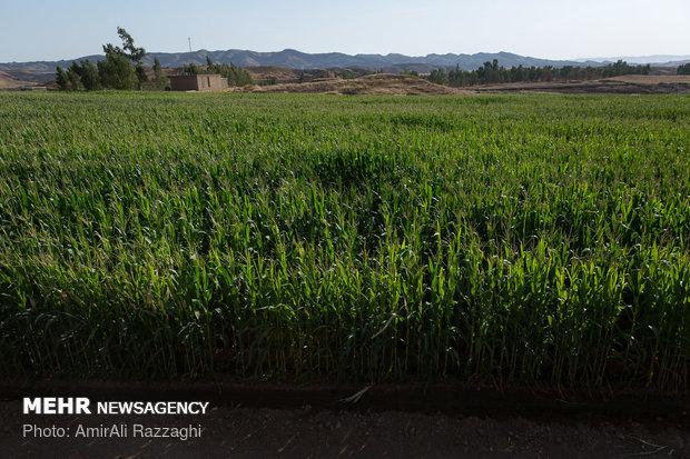 کشورهای (OECD) سالانه ۳۱۷میلیارد دلار ازبخش کشاورزی حمایت می کنند