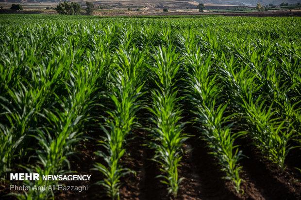 تدابیر ژاپن برای جلوگیری از زیان کشاورزان/تصویب بستههای حمایتی