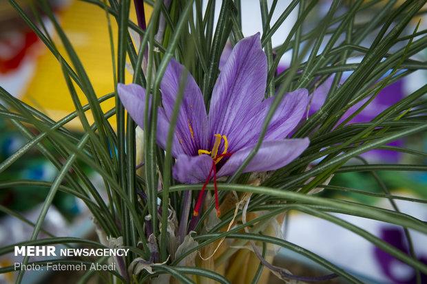 رشد اشتغال بخش سنتی با عرضه زعفران در بورس کالا