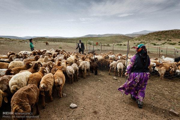 قوانین و مقررات در مناطق روستایی و عشایری نیازمند بازنگری است
