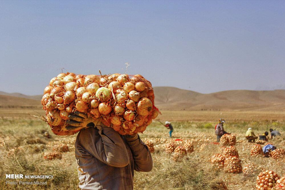 تولید ۵ میلیون تن محصولات کشاورزی در آذربایجان شرقی