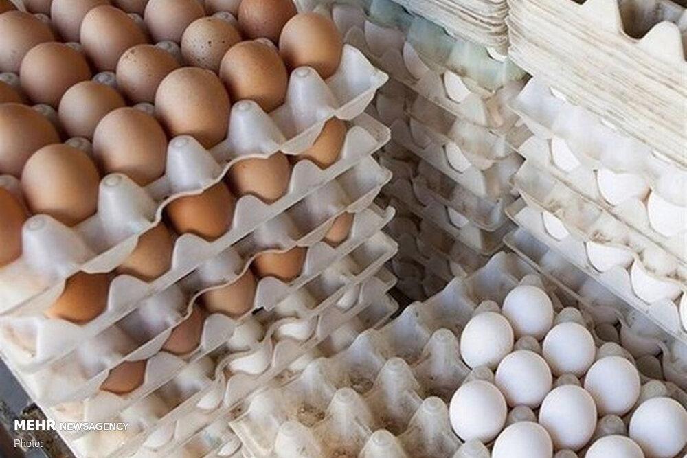نظارت ناکافی علت گرانی تخم مرغ