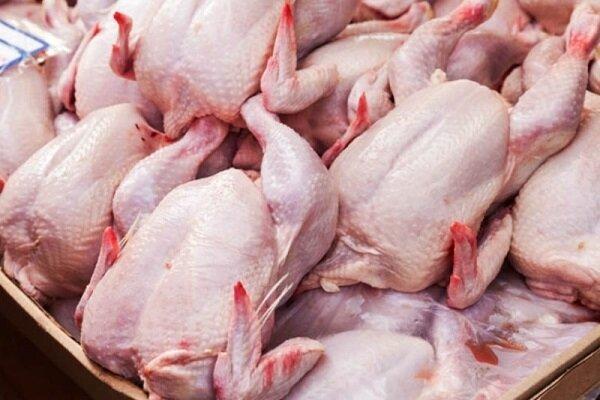 احتمال کاهش قیمت مرغ در روزهای آتی